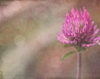 Blumen Fotografie - Pink Clover - 5 x 7 Fine Art Print - Natur Makro Blume Kleeblatt Rosa Tan Beige Pastell Bokeh rustikale Wohnkultur
