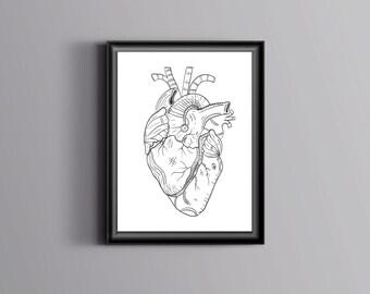 Anatomy heart art Anatomical heart Anatomy poster Heart anatomy Medical print Human anatomy Anatomy illustration Heart illustration digital