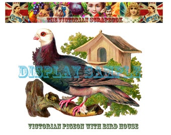 Large Victorian Scrap - Pigeon with Bird House - A4 Digital Download