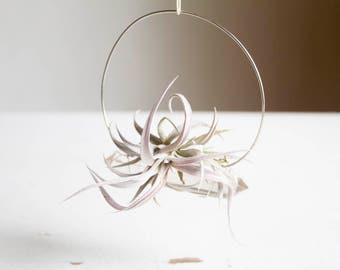 Boho Air Plant Crystal Garden, Hanging Quartz Airplant Swing Display, Silver Wire Wrapped, Chiapensis, Gift For Friend