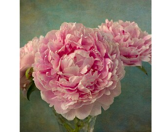 Peony Print, Pink Peony Photograph, Flower Still Life,  Floral Art Print, Peony Art, Shabby Chic Wall Decor, Nature Photography