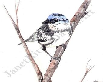 Cerulean Warbler Watercolor