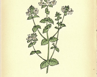 1930 German Botanical Print to Frame or for Paper Arts, Collage, Scrapbooking and MORE PSS 2499
