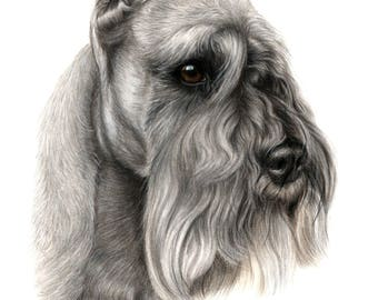 Pet lovers gift, SCHNAUZER , Custom pet drawing, animal portrait, pet portrait , dog portraits, personalized pet