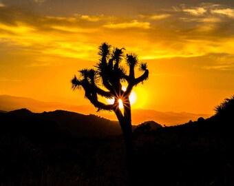 Joshua Tree at Sundown