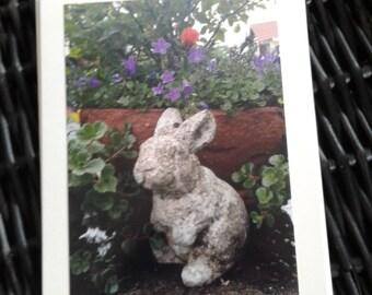 Bunny, amongst purple campanula
