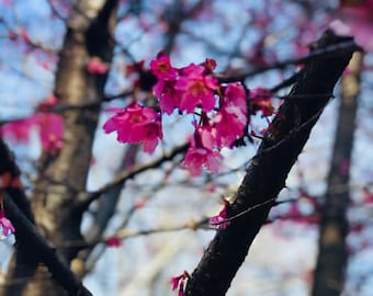 Les Fleurs #32
