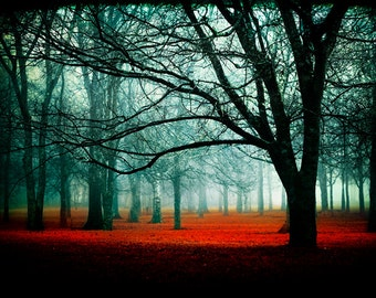 Enter - Fairytale Photography - red enchanted forest - trees woods landscape - fog photos
