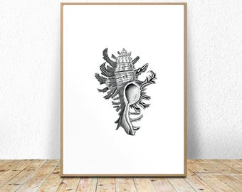 Modern seashell print, modern coastal print, modern beach print, contemporary, illustration, printable, instant download, black and white