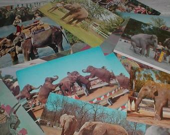 Twenty Four Elephant Postcards *Pachyderm* Circus Zoo ++