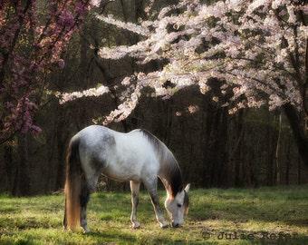 Horse Photography Equestrian Canvas Spring