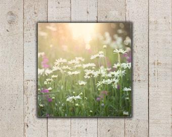 Fleurs de Marguerite, grande toile Art mural, pays Nature photographie, photo de marguerites, les filles de chambre décoration murale, pois de senteur, rose & vert, toile