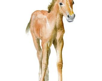 Horse Watercolor Painting Print - Giclee Print - 5 x 7 - Nursery Art - Pony Colt Foal Art
