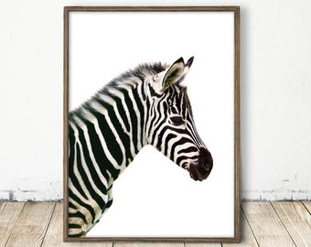 zebra print, zebra art, printable zebra art, nursery print, striped wall art, carnival art, baby animal print, baby zebra, baby zebra print