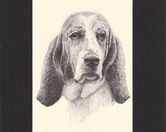 Basset  Hound Vintage Dog Print C.Francis Wardle Original 1935 Drawing Mounted with Mat Basset Hound Print