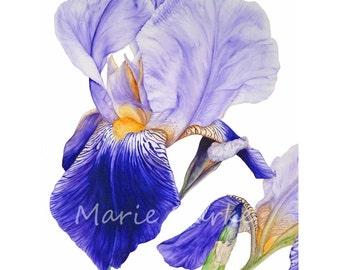 Flower Painting Art Print, Iris Watercolor Wall Art, Floral Art Print Botanical Illustration Gifts For Her, Watercolour Art Print, Fine Art