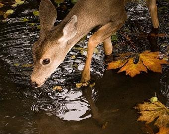 Deer Print, Fawn Print, Nature Wall Art, Canadian Shop, Maple Leaves, Deer Photography, Animal Print, Nature Photography, Wildlife Prints