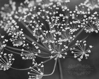 Dill Photograph, Black and White, Wall Art, Herb Photo, Home Decor, Garden Print, Fine Art Photography, Ethereal, Flowers, Blooms, Grey