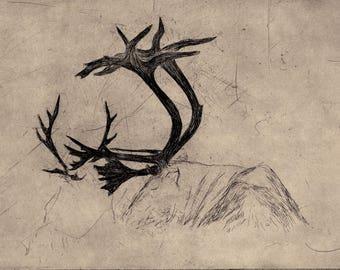 Sleeping Reindeer - original etching