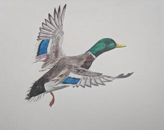 Flying Mallard (ORIGINAL)