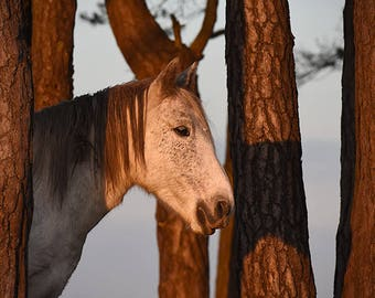 Horse photo, horse wall art, pony photo, equine art, shetland pony photo, horse decor, horse art, equestrian decor, new forest pony