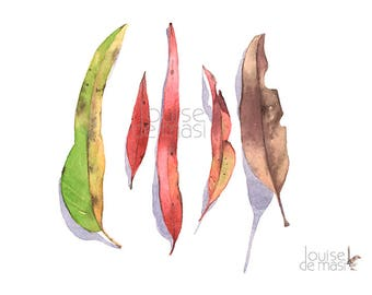 Eucalyptus Leaves original watercolor painting, Original watercolor painting eucalyptus leaves, Gum leaves original watercolour painting