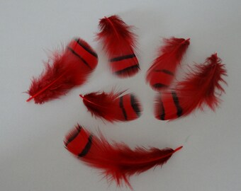 Set of 50 red tinted Partridge feathers