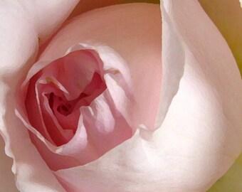 Rose Awakening PREMIUM Greeting Card and Matching Postcard, Pink Rosebud Card, Delicate Pink Rosebud Greeting Card, Romantic Pink Rose Card