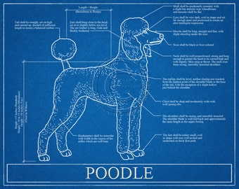 Poodle Blueprint Elevation / Poodle Art / Poodle Wall Art / Poodle Gift / Poodle Print
