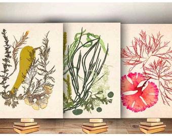 Algues oeuvre Print, pressé d'algues Art, art de l'océan, l'art nautique, Marine decoration murale, herbe de mer océan, art d'algues, la valeur 3 affiches algues