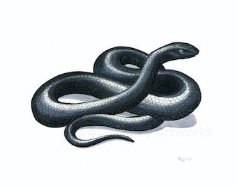 Snake Art Giclee Print - Fine Art Reproduction of Original Indigo Snake Illustration, Black and White Reptile Decor, Nature Art 8.5X11