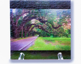 Beautiful southern Oak Avenue on a wood print. This original photo is given added dimension by the wonderful texture of the milled board.