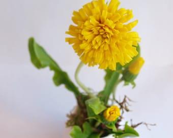 Flower arrangement, cold porcelain flower, dandelion cup, flower clay flower polymer clay, accessories flowers, dandelion