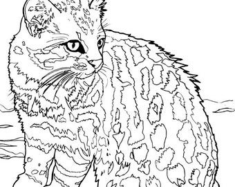 Pampas Cat Printable Coloring Page