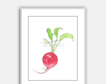 Radish Watercolor Illustration Vegetable Art Print Instant Download Wall Art