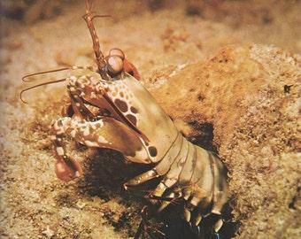 2 Vintage crustaceans poster