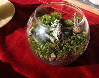 Glass moss terrarium