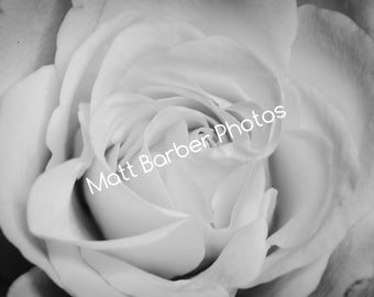 Monochrome Rose Photo Print