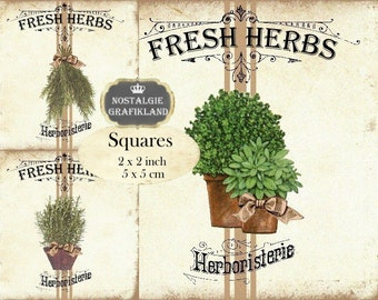Herbs Fresh Herbes Provence 2x2 inch squares Instant Download digital collage sheet TW169 Rosemary Thyme Sage