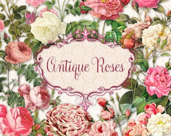 Antique Roses   Vintage Pink & White   Clipart Instant Download
