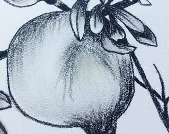 Pomegranate charcoal pencil drawing.Original drawing.Charcoal pencil art work.