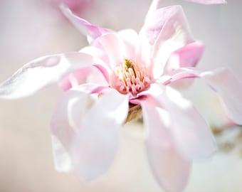 Sun-kissed Magnolia