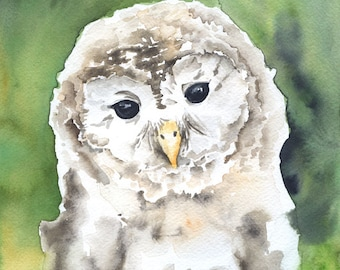 Barred Owl Watercolor Painting Giclee Print 8 x 10 - 8.5 x 11