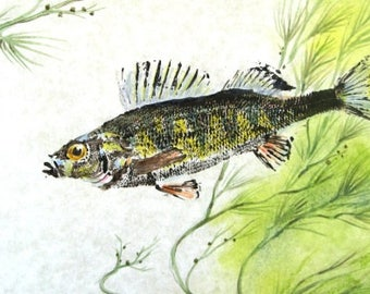 GYOTAKU fish Rubbing yellow Perch 8.5 X 11 quality Art Print Cottage Decor by artist Barry Singer
