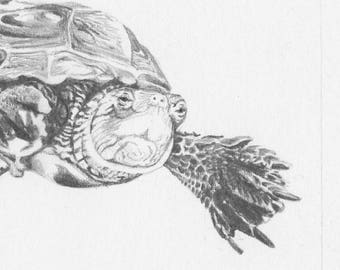 Turtle_- Original Pencil Drawing, wildlife art