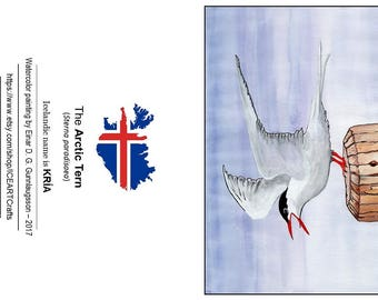10 postcards with a picture of the strong and beautiful ARCTIC TERN .