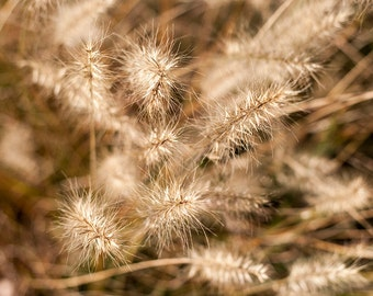 Fall weeds wall art, Nature Photography print or canvas, country home decor, fall mood canvas print, nature art photography