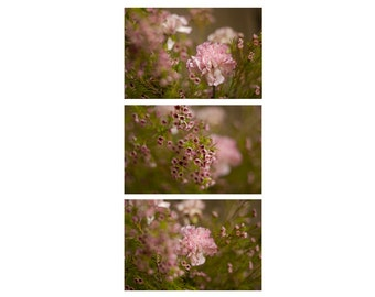30% Off Flower Photo Set, Nature Fine Art Photography, Nature Wall Art, Pink Flowers Print, Dreamy Photo, Discount Photos, Cute Photo Gift
