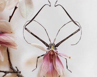 insects_no_8