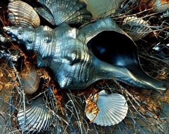 Silver Shells -  8x10 Photo Print